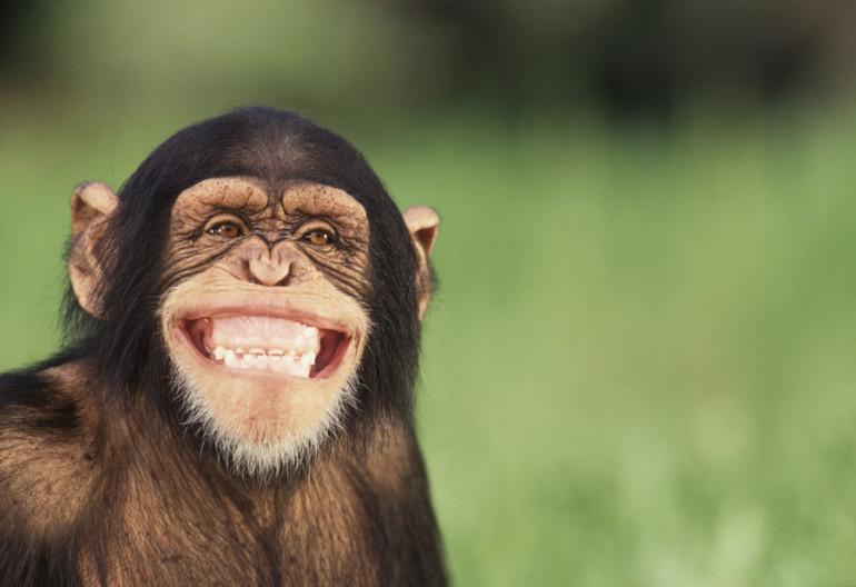 ¿Por qué el humor puede marcar la diferencia en el marketing y en la publicidad?